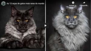 As 13 Raças de Gatos Mais Raras do Mundo