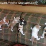 Esses Gatos São Muito Fofos