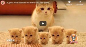 Os Gatos Mais Adoráveis do Mundo