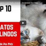 As 10 Raças de Gatos Mais Lindos Mundo