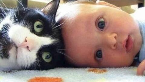 Gatos e Cães Bonitos Amam Bebês