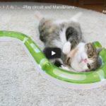 Circuito Curioso de Gatinhos Fofos