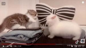 Ria Com Gatinhos