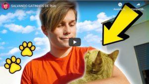 Salvando Gatinhos de Rua – Gato Galactico