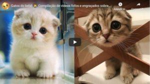 Vídeos Fofos e Engraçados Sobre Gatos