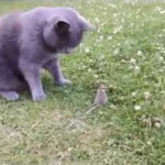 Brincadeira de Gato com Rato