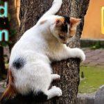 Gatinhos Adoráveis