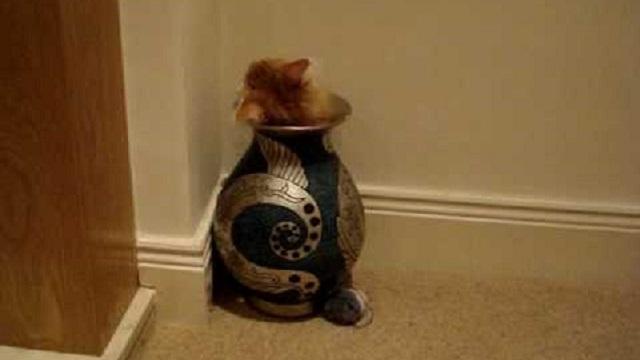 Gato Mergulhando no Vaso