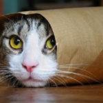 Gatos Engraçados e Enrolados