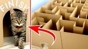 Labirinto Gigante Para Gatinhos