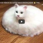 Tente Não Rir com os Vídeos de Gatos Mais Engraçados – Parte 2