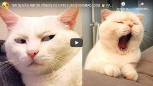 Tente Não Rir com os Vídeos de Gatos Mais Engraçados – Parte 3