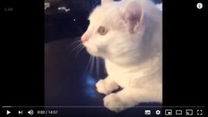 Read more about the article Se Você Rir Perde – Gatos Engraçados