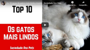 Read more about the article As 10 Raças de Gatos Mais Lindos Mundo