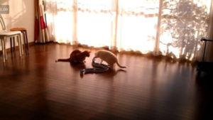 Gato Viciado no Circuito de Jogo