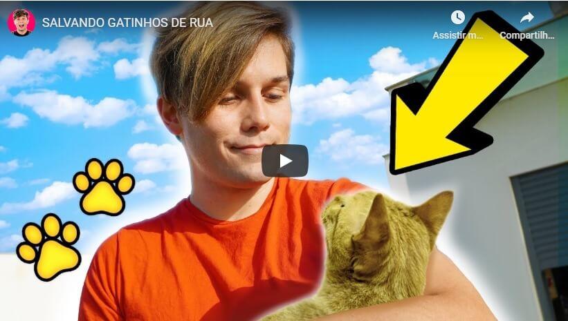 Read more about the article Salvando Gatinhos de Rua – Gato Galactico