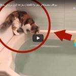 Situações Engraçadas e Embaraçosas Com Gatos