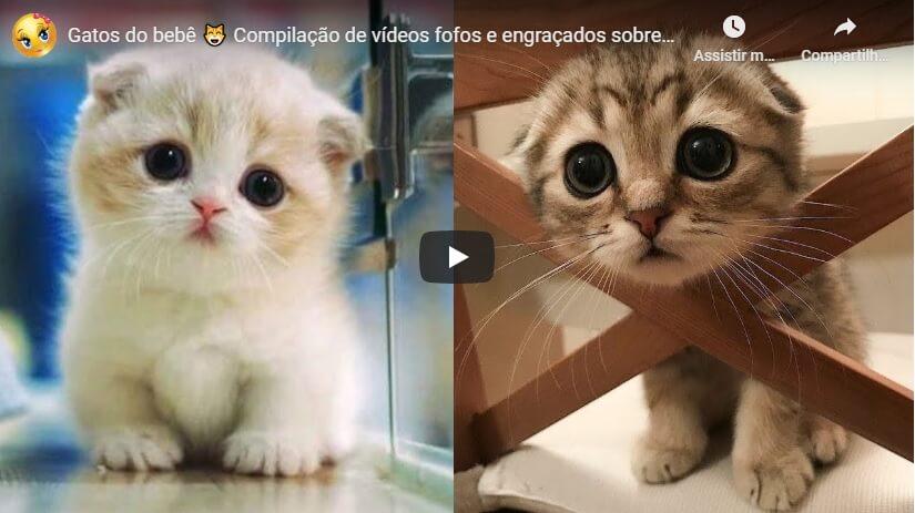 Read more about the article Vídeos Fofos e Engraçados Sobre Gatos