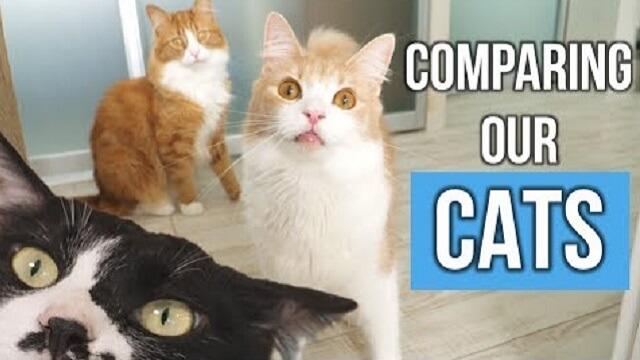 Comparando Nossos Gatos