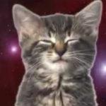 Gatos Cantores do Espaço